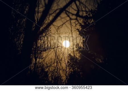 Moonlight In Forest Nature Background. Night Sky With Moon Shining Through Trees.tree Silhouettes An