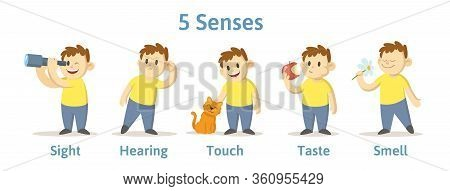 Set Of 5 Senses In Cartoon Character Cards. Sight, Smell, Touch, Hearing, And Taste Explained With C