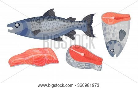 Raw Salmon Fish Slabs With Red Flesh Isolated On White Background Vector Set