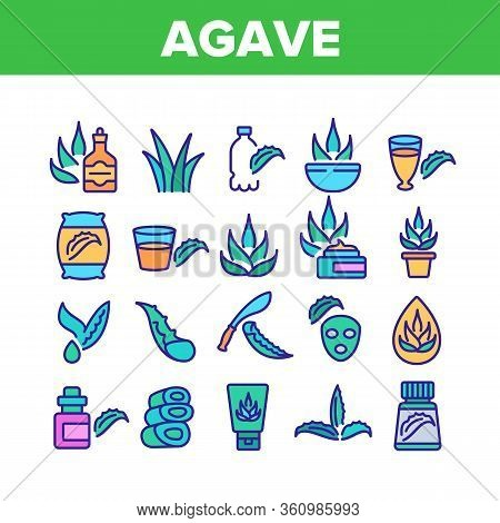 Agave Aloe Vera Plant Collection Icons Set Vector. Agave Natural Herb For Facial Mask Cosmetic And C