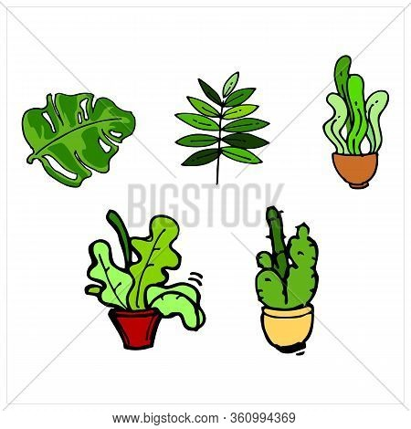 Abstract Botanical Set Of Line Leaves. Tropical Jungle Leaves And Various Shapes, Continuous Line Le