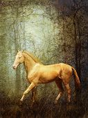 Cremello stallion Akhal-Teke in mystical autumn forest poster