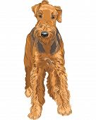 color sketch of the dog Airedale Terrier breed poster