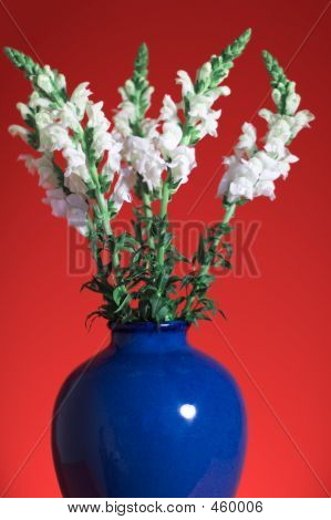 Snapdragon Bouquet On Red Background