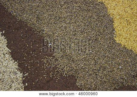 agro carpet