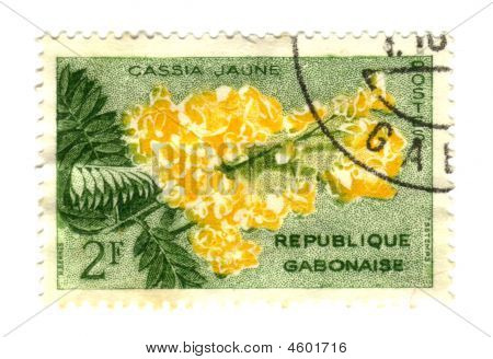 Gobon stamp with yellow Cassia Jaune flower poster