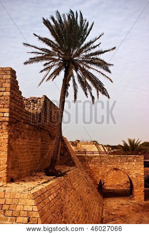 Palm tree on exotic ancient remains