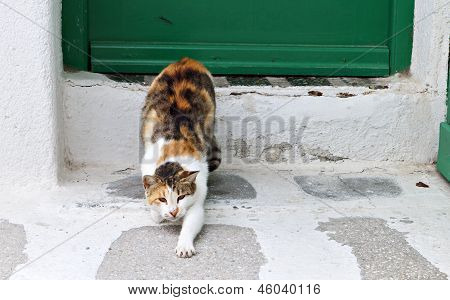 Cat outside a Greek house