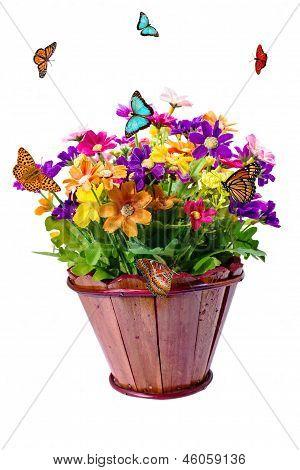 Flower In Pot And Butterflies