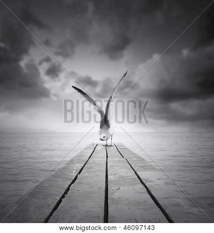 Beautiful gull with a wingspan resting on a pier at the beach with dramatic sky in black and white poster