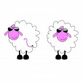 sheep cartoon with sunglass vector illustration on a white poster