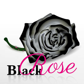 black rose vector on white background