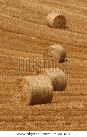 harvest, irish summer