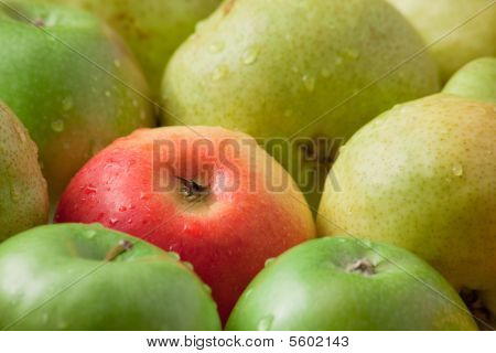 Apples And Pears After A Rain