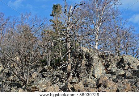 Landscape In Mountain Taiga
