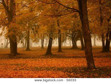 Misty Autumn Morning 2