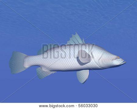 Barramundi fish underwater - 3D render