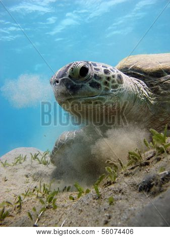 Turtle breathing out sand