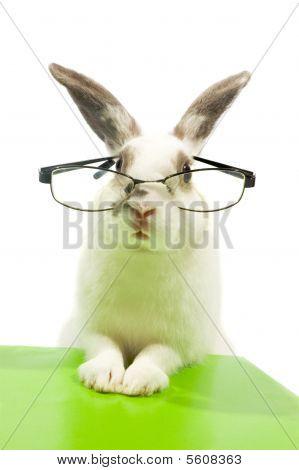 White Rabbit Wearing Glasses