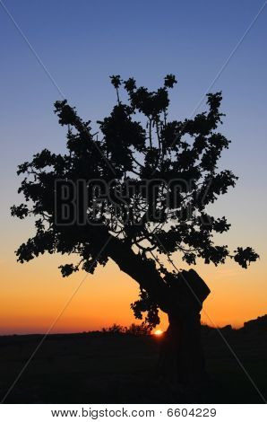 Sunset Tree Silhuette