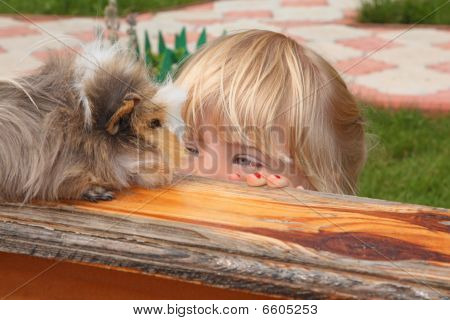 Little Girl  Looking On Guinea Pig