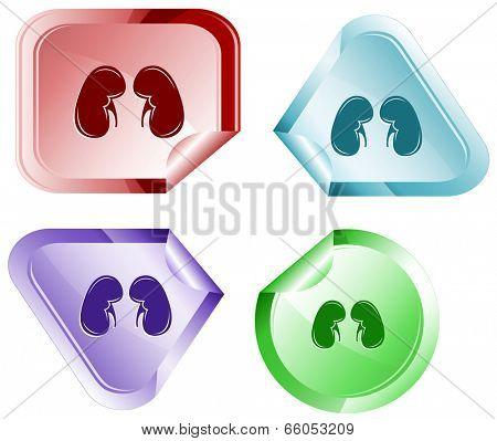 Kidneys. Stickers. Raster illustration.