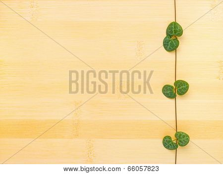Tendril Ceropegia Woodii On Bamboo Wooden Background