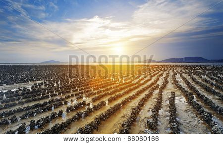 beautiful beach and sea sunset in HongKong Pak Nai at Oyster Farm as row poster