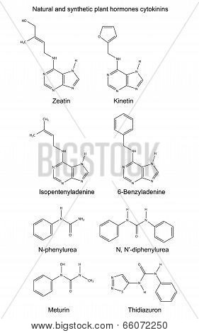 Structural chemical formulas of natural and synthetic plant hormones cytokinins Illustration, vector, isolated on white poster