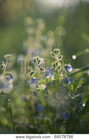 Wildflowers background