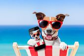 dog taking a selfie in summer holidays poster
