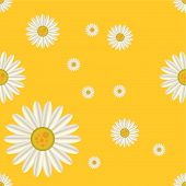 Vector illustration of daisy seamless pattern isolated on yellow background poster