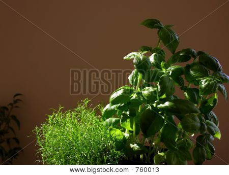Green In Sun Light