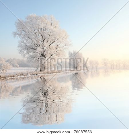 Frosty winter tree in the sunshine