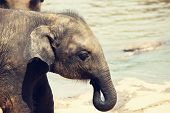 Elephant  on Sri Lanka poster