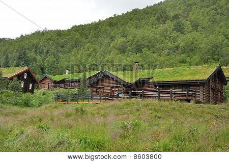 Green roof houses