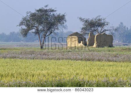 broken tharu house and fields in Terai, Bardia, Nepal