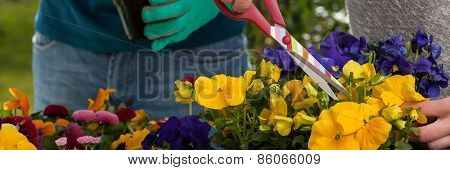 Horticulturists Planting Flowers
