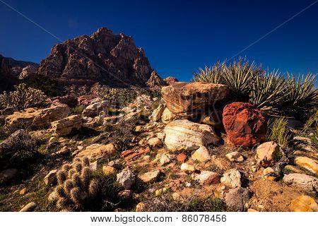 Desert Hiking at Red Rock Canyon