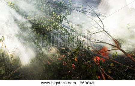 A Fire And Smoke In A Wood