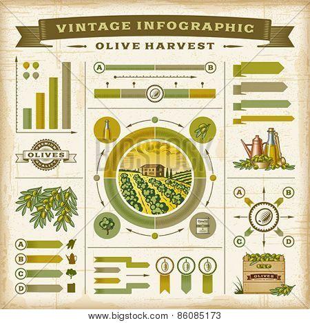 Vintage olive harvest infographic set. Editable EPS10 vector illustration with clipping mask.
