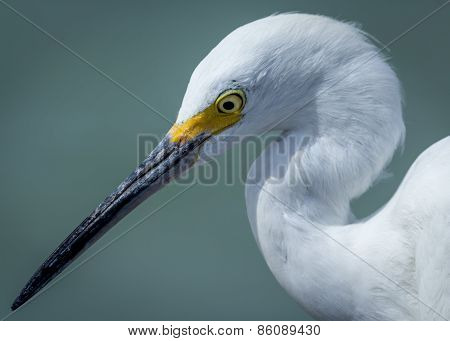 Egret at Florida Beach