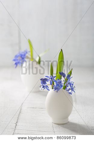 Bunches of  early spring   flowers ( Scilla siberica) in eggshells  on the white wooden plank. Shallow depth of field, focus on near flowers. Easter decor