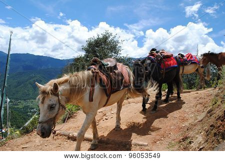 Porter horses returning from Taktsang