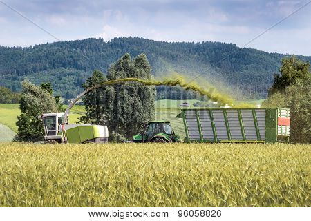 Harvesting of whole crop silage