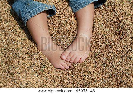 Feet white baby sitting on wheat