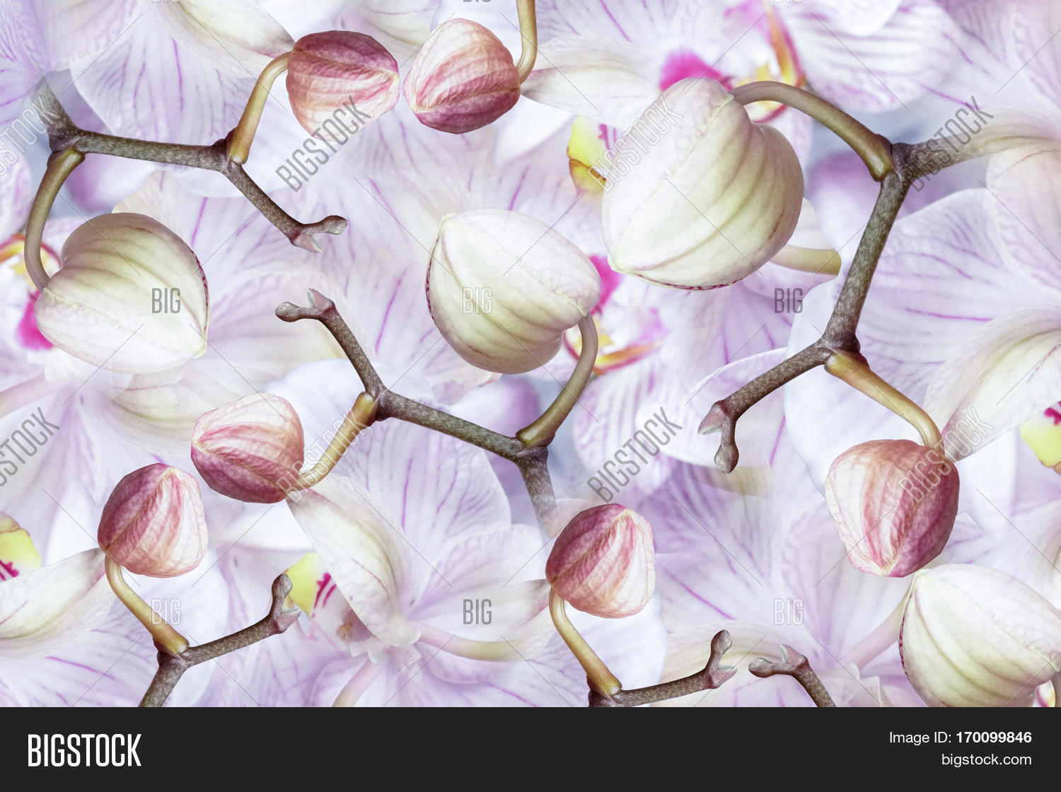 White Violet Pink Blue Image Photo Free Trial Bigstock