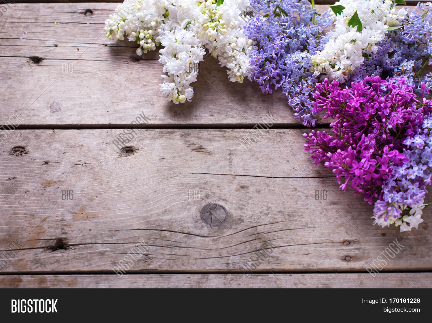 Spring Floral Image Photo Free Trial Bigstock