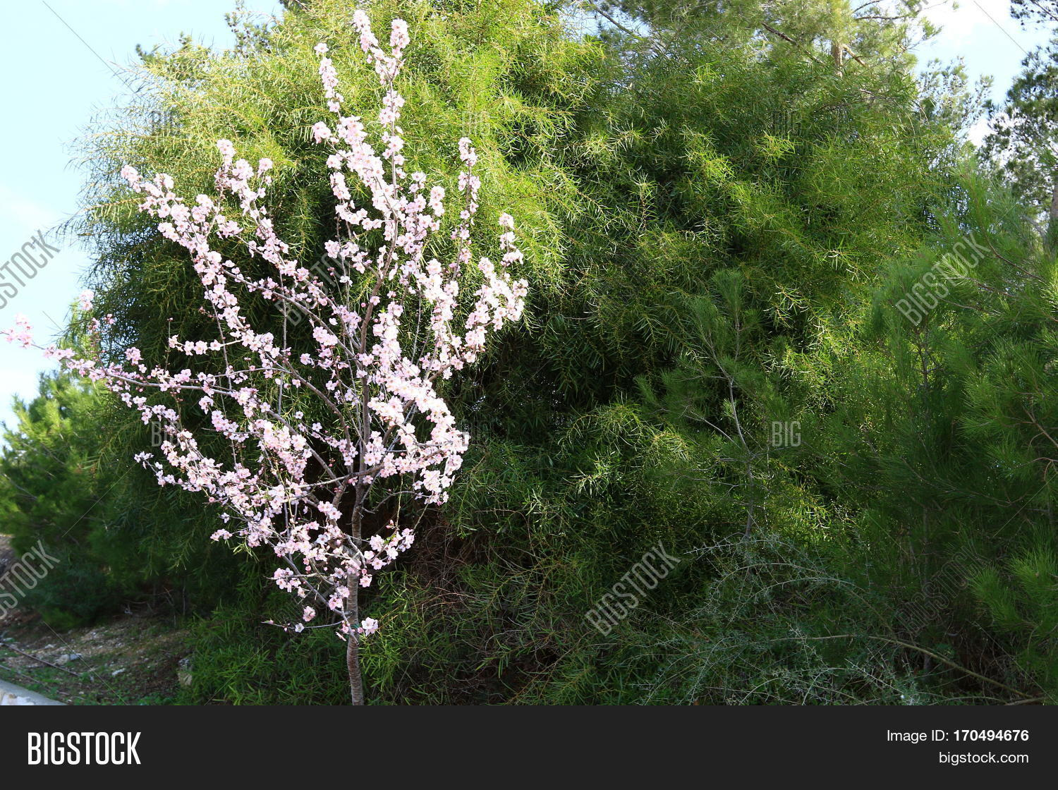 Israel Spring Holiday Image & Photo (Free Trial) | Bigstock