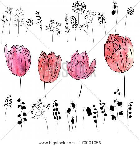 Set with pink and red tulips isolated on white. Watercolor effect.Flowers, plants and herbs - black silhouettes.